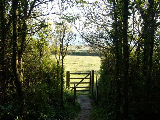 View through the woods to a gate to the sea